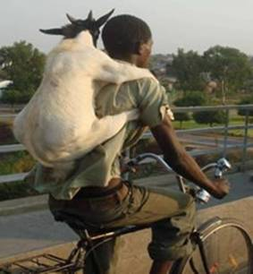 The Man and his Goat. Write a 500-1000 word story inspired by the picture ...